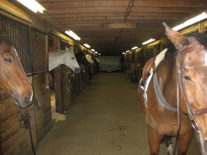 Nearby stables