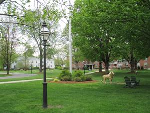 The campus landscape