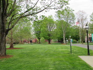 A view of the campus green