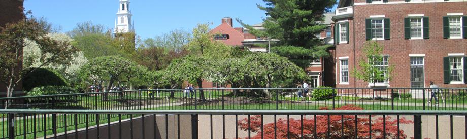 Harvard University courtyard
